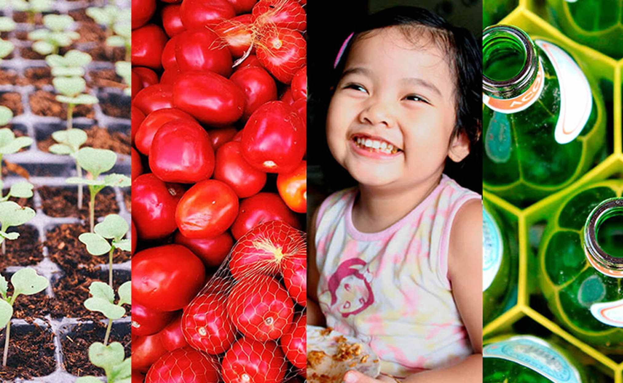 Incubation programme for sustainable food businesses